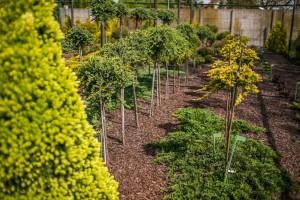 szkolka drzew i krzewow  3