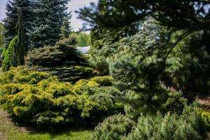szkolka drzew i krzewow 4